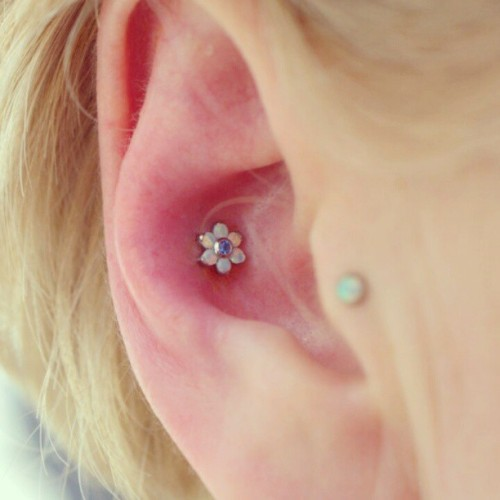 simple little #conch #piercing. I really liked the jewelry though. white opals around an arctic blue center from #ANATOMETAL. #bodypiercing #legitbodyjewelry #legitpiercingslook #appmember #associationofprofessionalpiercers #piercingsbylou #safepiercing #hawthorne #gardenstateplaza #newjersey #northjersey #pleasurablepiercings #pleasurablebody  (at Pleasurable Piercings)