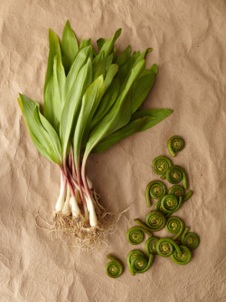 thevegetablemarket:  Fiddlehead and Wild Ramps via Gilt Taste