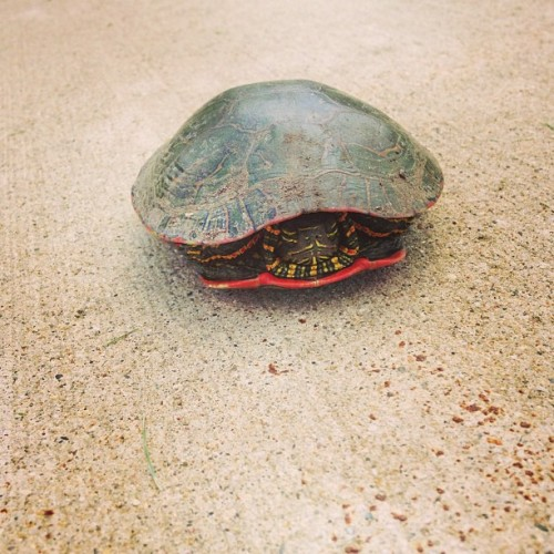 I helped a turtle cross the road today, what did you do? :P