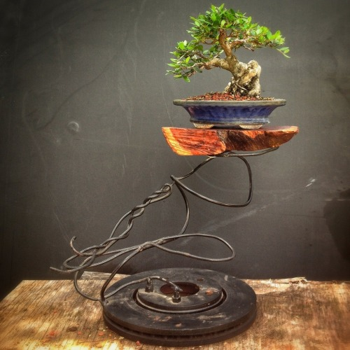 Cool bonsai stand