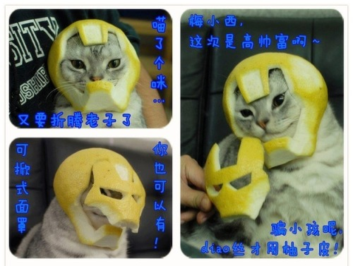 buzzfeed:  Here is a cat wearing an Iron Man helmet made out of a grapefruit. You're welcome.  Hahaha