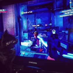 The kitties love Borderlands