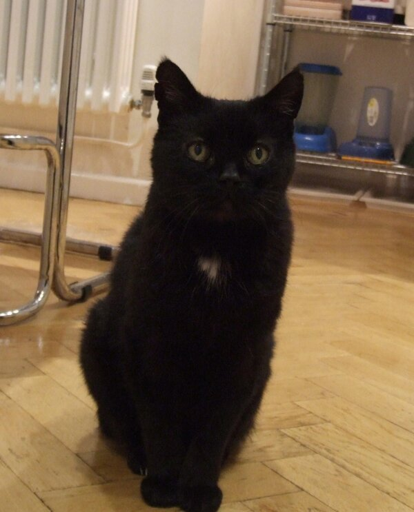 My cat is sad because he's a lifelong pacifist, but he once hurt a spider by accident, and he still thinks about it sometimes Photo/caption by ©why my cat is sad