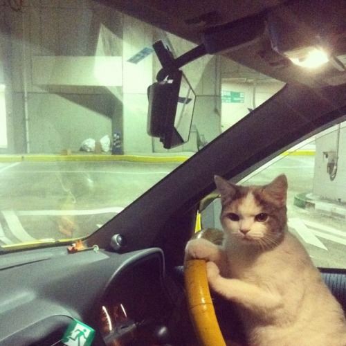 crazycatslovers:  We're gonna be late! Let's go!