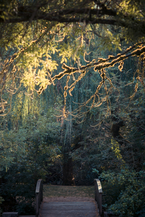 theoceanrolls:  Johnson Creek Park (by photosbysomeguy)
