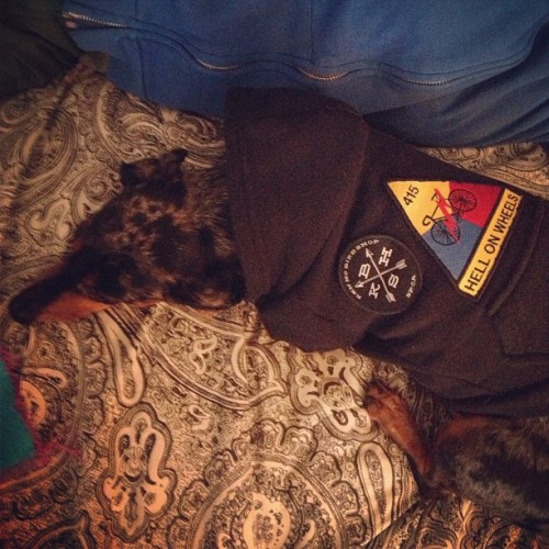 New patch on the puppy hoodie… the ethereal #kenhobikeshop @k3nho