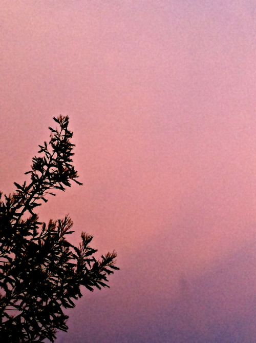 A pink sky from my house