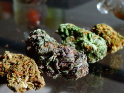 kushmyfacee:  marijuanandmusic:  420central:  Jack Herrer, Purple Kush, Master/Platinum Kush hybrid, Green Crack — P.S. I love and miss you.  holy shit those are my four favorite strains how did you know!  I just had a kushgasm!