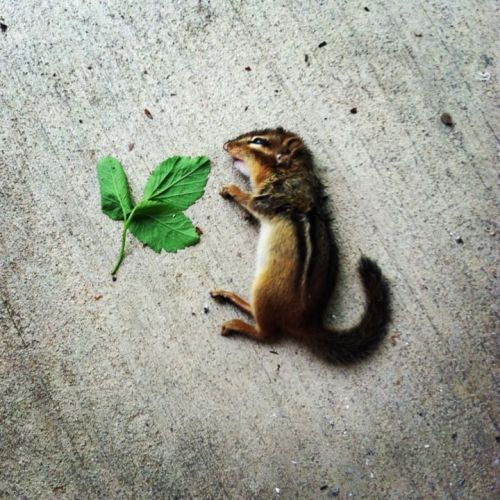 summertimeinh-ll:  my cat killed this lil homie and laid him out on my porch like this for when i woke up this morning he's a good cat and i love him