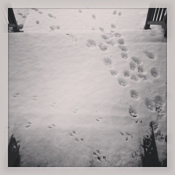 #snow #bird #dog #paw #prints #winter #tn