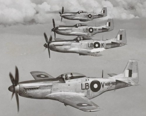 Mustangs Of The Commonwealth…Image #4: A flight of North American built Mustangs in service with 85 Squadron RAAF