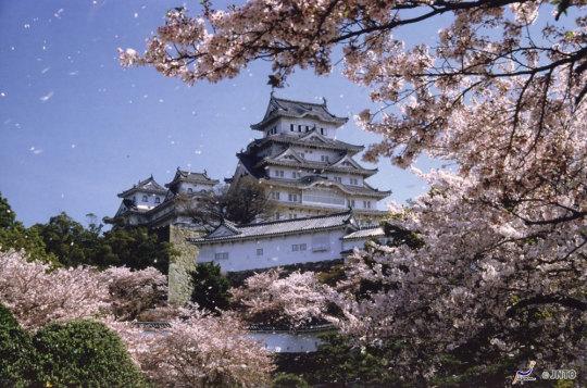 Les plus beaux spots Sakura au Japon