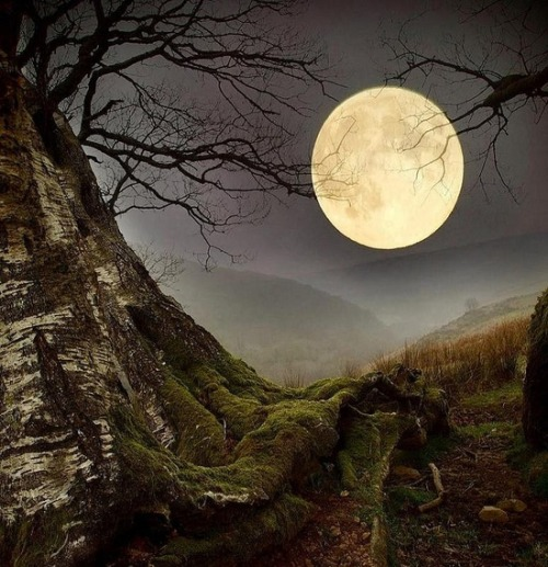 bluepueblo:  Forest Moon, Wales photo via kuro