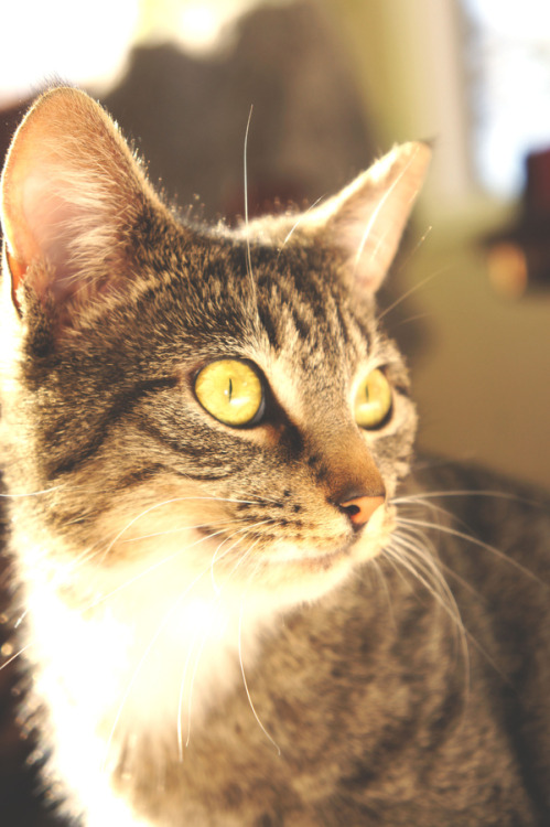 photogenicfelines:  (Donovan Acuna)