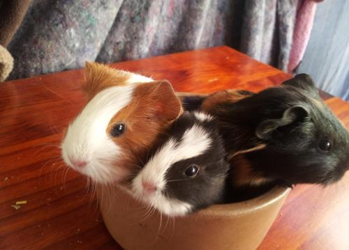 cup full o' piggies!