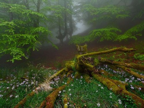 ecocides:  Gorbea Natural Park - Basque Country, Spain | image by Juan Pavon