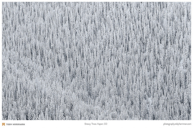 Snowy Trees Aspen, CO on Flickr.Via Flickr: One of my favorite shots I took back in Colorado this past December. Website | facebook | Google+ | Blog | Stipple