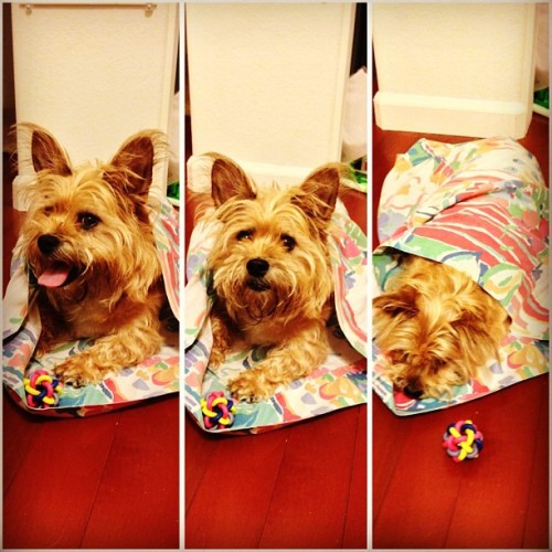 Sleeping bag for dogs 🐶 #troiboy