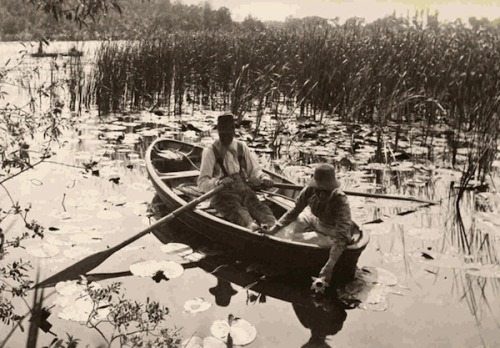 lauramcphee:  Gathering Water Lilies, 1886 (Peter Henry Emerson)