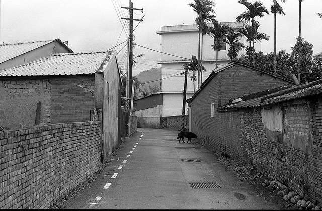 The end of the road on Flickr. Nikon FE, Kodak TX400 I don't try to keep walking this way after seeing the size of that stray dog : (