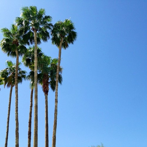 The view in Cali, @coachella or not. #palmsprings #coachella #tiscoachella