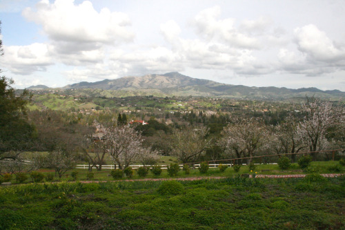 "MOUNT DIABLO from Dao HouseDanville, California©Laura Quick Rumors:Mount Diablo has long been the site of numerous reports pertaining to cryptozoology, hauntings, mysterious lights, and various other Fortean phenomena (it is rumored that the name ""Mount Diablo"" is derived from the propensity for such weird events to be alleged at, or in the immediate vicinity, of the mountain). Phantom black ""panthers"" are seen with unusual frequency on the slopes of the mountain, as well as at the ""Devil's Hole"" region of the Las Trampas Regional Wilderness. As early as 1806, General Mariano Guadalupe Vallejo reported an encounter with a flying, spectral apparition, while engaged in military operations against the Bolgones band of the Bay Miwok tribe. In 1873, a live frog was said to be found within a slab of limestone at a mine on Mount Diablo. source Inspiring: The popular video game series Diablo was named after the mountain. One of the co-founders of Blizzard North David Brevik grew up in the area. Mount Chiliad, the mountain featured in the video game Grand Theft Auto: San Andreas, is based on Mount Diablo. Mount Diablo is also used in the Rick Riordan book The Lost Hero as the home of the giant Enceladus. Mount Diablo is referenced in the title and lyrics of the song ""Mt. Diablo"" by the pop-punk band The Story So Far."