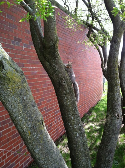 Close Encounters of the Squirrel kind.