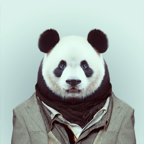 zooportraits:  PANDA by Yago Partal for ZOO PORTRAITS