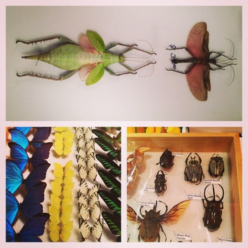 #bugshow  (at Natural History Museum of Los Angeles County)