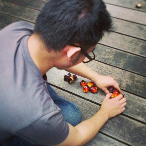 @isaactanth busy arranging palm oil fruits for the next shoot. #mpob #photoshoot