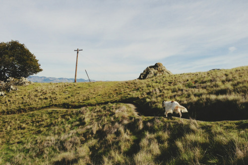 kevinruss:  Evie on the Johnson Ranch trail. San Luis Obispo, California