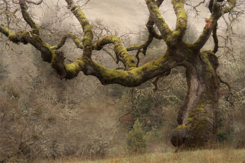 naturespiritheart:  Dark Hollow Oak The Winston Eye  David Lorenz Winston