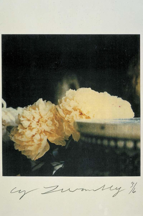 free-parking:  Cy Twombly, Peonies, Bassano in Teverina, 1980