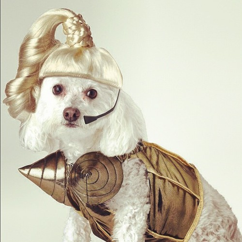 Blond Ambition Dog Costume at Urban Outfitters #madonna #poordog #cute #iloveit #mdna