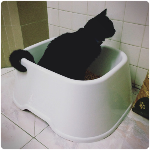 PeeWee Mimi trying out his new litter box… Hope this works well!