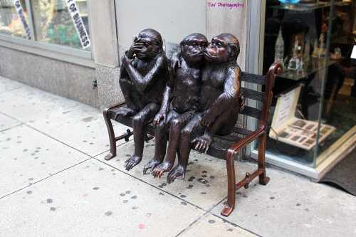 Random monkeys on a bench in NYC. Not sure why this is so awesome, but it is.
