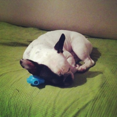 #frenchiegram #instafrenchie #petstagram #dogstagram #frenchbulldog goodnight!