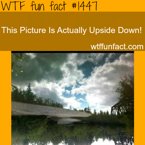 wtf-fun-factss:  awesome photography illusion WTF FUN FACTS HOME  /  See MORE TAGGED/ weird FACTS