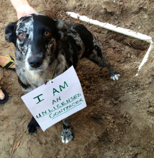 dogshaming:  Unlicensed Contractor  Winter has taken it upon herself to do some major excavating and possibly plumbing, without a…  View Post