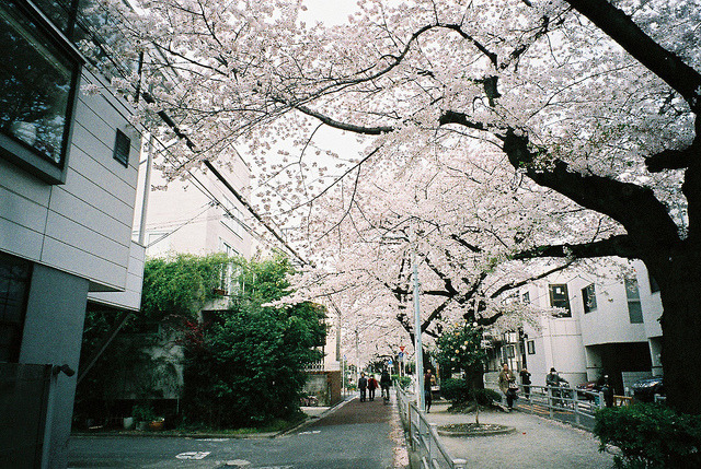 dreams-of-japan:  FH020034 by hiki. on Flickr.