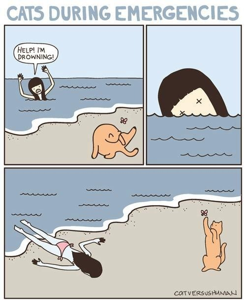 mithril85:  CatS during emergencies….