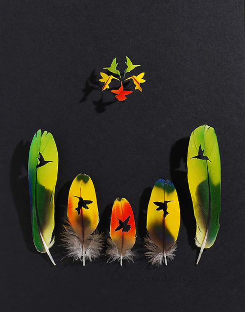 laughingsquid:  Cut Feather Shadowboxes by Chris Maynard