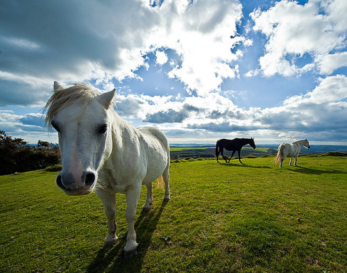explore-nature:  Wild Horses by Simon M Turner on Flickr.