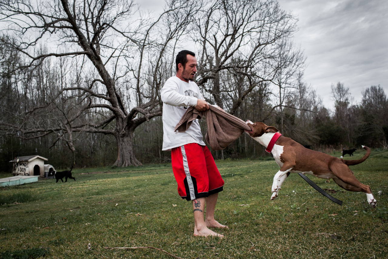 Houma, Louisiana, 2013 - Herman, 29, uses a towel to swing his pet pitbull around while two less domesticated pitbulls patrol the yard of his family's mobile home in the woods outside Houma.