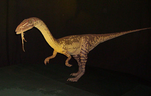 Coelophysis (Coelophysis bauri)(pronounced see-lo-fie-sis)Meaning: hollow form (in reference to its light, hollow bones) Type: dinosaur, therapodDiet: carnivorousPeriod: late TriassicLocation: New Mexico, USALength: 2.5-3m (8-10ft)Height: unknownWeight: up to 45kg (100 lb) Dinosaurs: 68-71