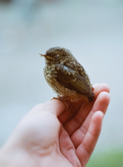 hellanne:  (by Marta Soltys)
