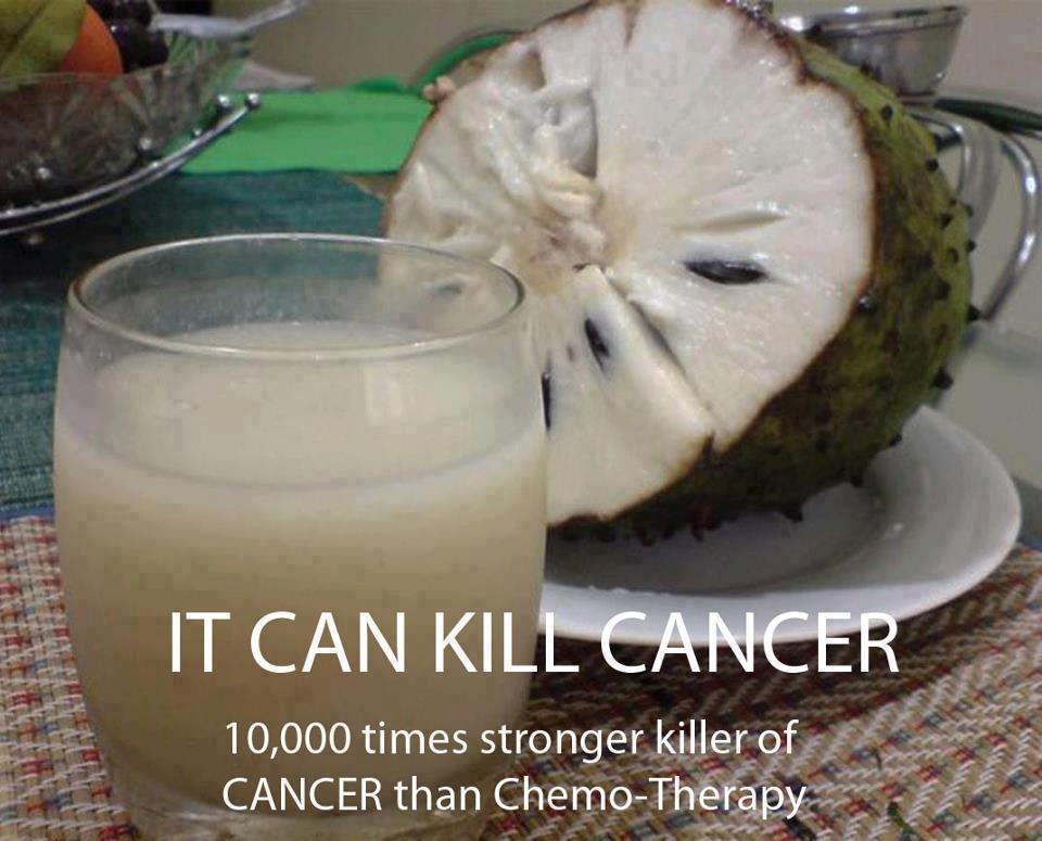 "The Soursop fruit from the Graviola tree is a miraculous natural cancer killer - 10,000 times stronger than Chemotherapy. A study published in the Journal of Natural Products, following a recent study conducted at Catholic University of South Korea stated that one chemical in Graviola was found to selectively kill colon cancer cells at ""10,000 times the potency of the commonly used chemotherapy drug Adriamycin."" Research shows that with extracts from this miraculous tree it's now possible to: Attack cancer safely and effectively with an all-natural therapy that does not cause extreme nausea, weight loss and hair loss. Protect your immune system and avoid deadly infections. Feel stronger and healthier throughout the course of the treatment. Boost your energy and improve your outlook on life. Read More"