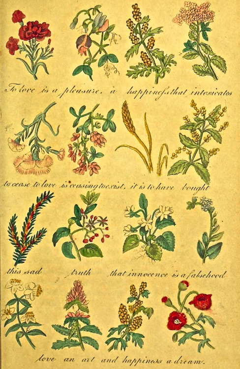 The Language of Flowers (1839) To love is a pleasure, a happiness that intoxicatesto cease to love is ceasing to exist, it is to have bought this sad truth that innocence is falsehood love an art and happiness a dream.