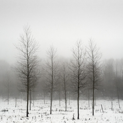 definitelydope:  winterscape