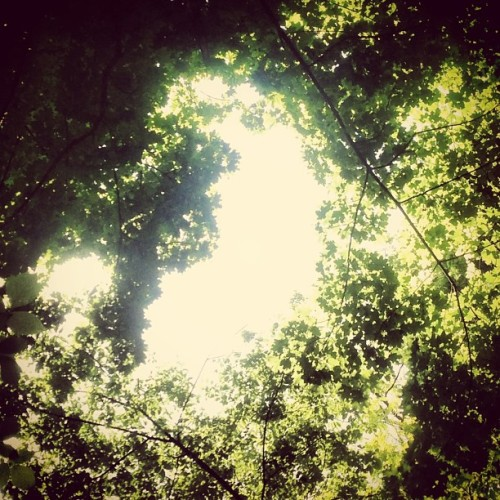 Looking up through the trees. #iphonesia #image #imagery #instahub #instagood #iphonesia #instafamous #instagramhub #nature